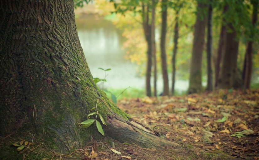 Prześliczny oraz {porządny ogród to nie lada wyzwanie, szczególnie jak jego pielęgnacją zajmujemy się sami.